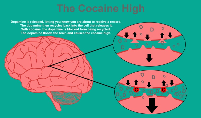 cocaine and dopamine